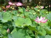 nature_flower001